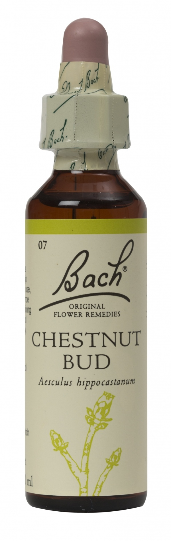 Bach Flower Remedy Chestnut Bud 20ml